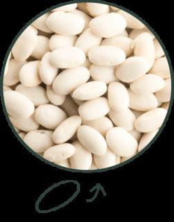 haricot blanc - forme de lingot