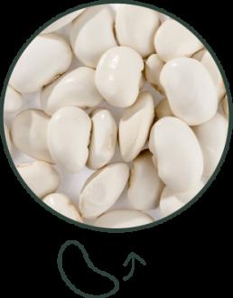 haricot tarbais tradition - forme de rein